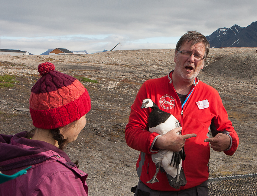 Near the animals. Helping Maarten Loonen with the annual goose catch in Ny-Ålesund. Photo: Øystein Varpe/UNIS