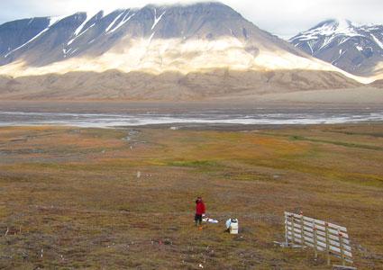Microfun fieldwork, Adventdalen, Svalbard. Photo: Anna Vader/UNIS