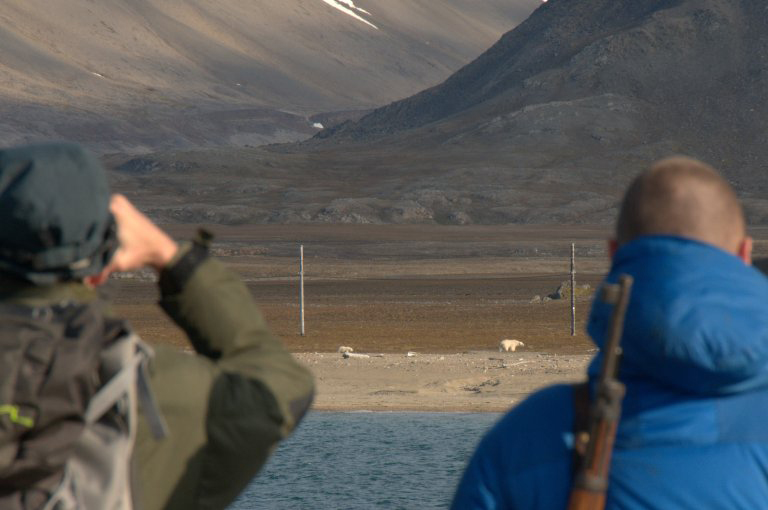 Persons looking at two polar bears, Isfjord Radio/Kapp Linné, Svalbard. Photo: Kevin Newsham