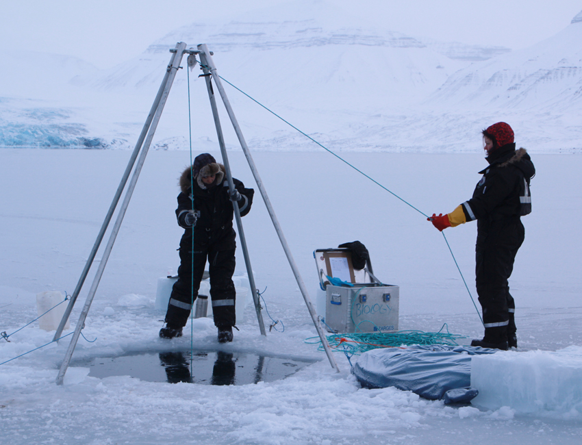 Featured image for 'Arctic zooplankton can adapt to a changing Arctic climate'