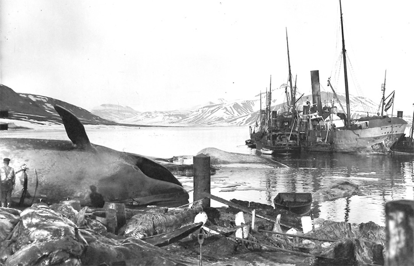 Grønfjorden Svalbard