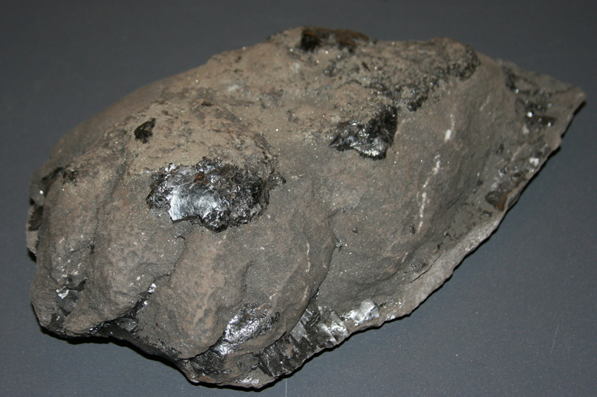 fossil pantodont track