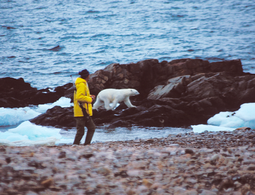 Featured image for 'Humans and polar bears in Svalbard'