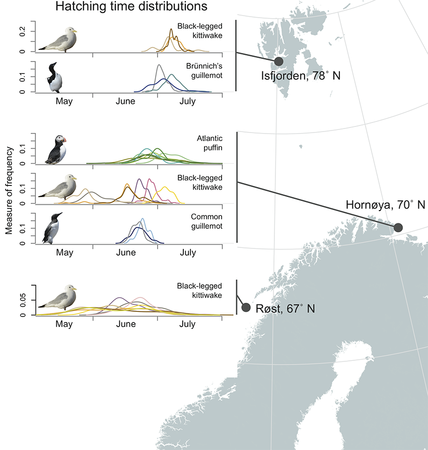 Figure showing hatching time distributions of some seabirds in Svalbard and Northern Norway. Author: Zofia Burr