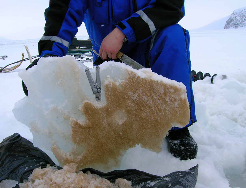 Reduced sea ice – big consequences