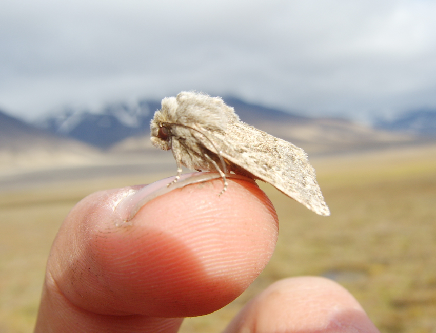 Creepy crawlies on Svalbard; unseen and often forgotten