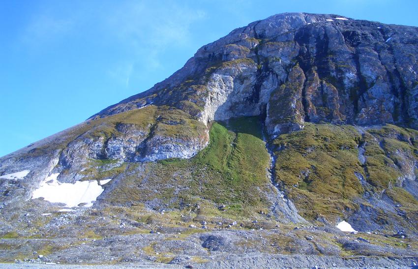 Bird cliff, Blomstrand, Kongsfjorden