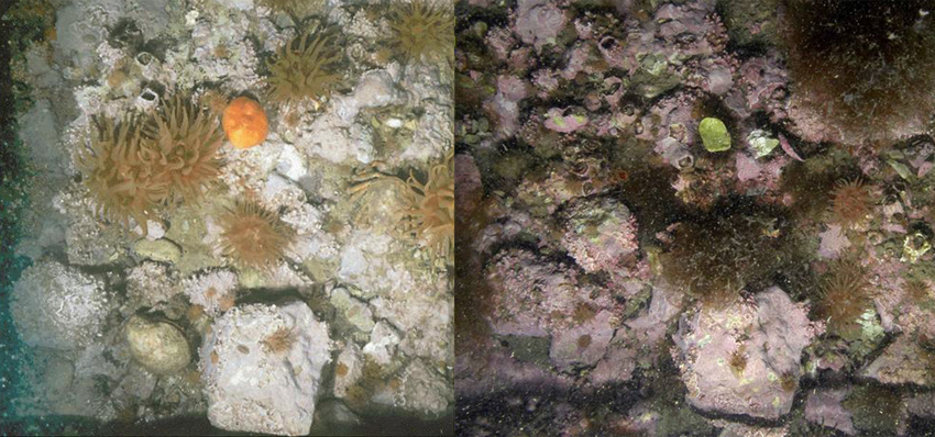 Ocean floor by Kvadehuken, 1980 (left) and 2008 (right).