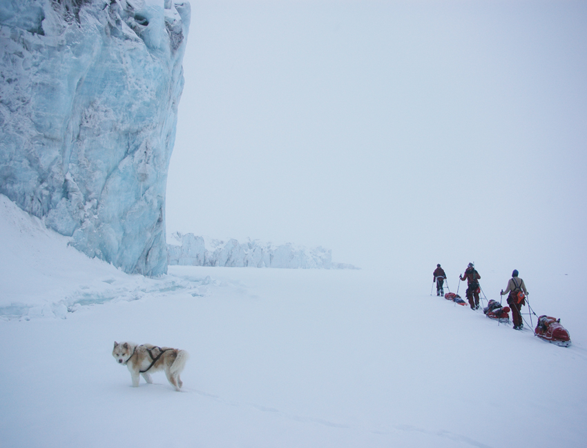 Dog and skiers on Svalbard