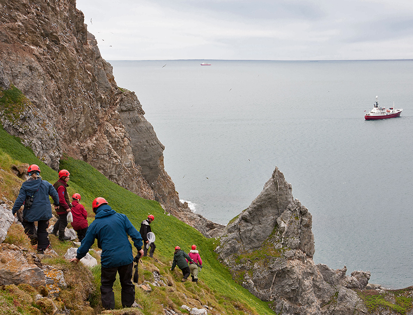 Studying ecological interactions in an Arctic bird colony. Steep climb and much to learn. Photo: Øystein Varpe/UNIS