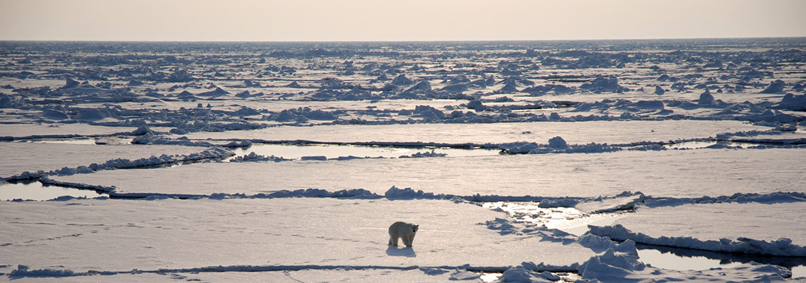 Polar bear on the sea ice. Photo: Lucie Strub-Klein/UNIS