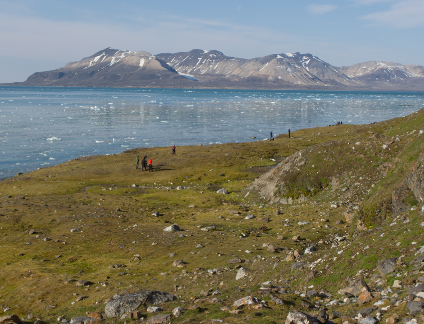 The Green Arctic – Plants as cornerstones in terrestrial ecosystems