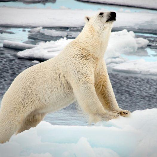 Welcome to Svalbardseminaret 2020
