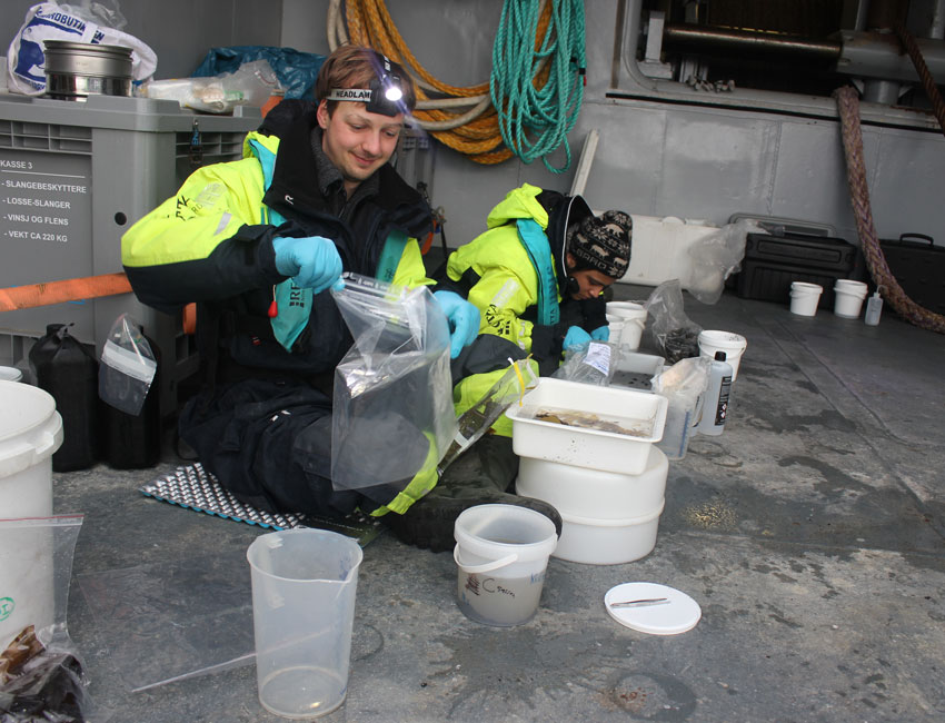 UNIS PhD students Sil Schuuring and Cheshtaa Chitkara sieving and sorting beach samples onboard KV Barentshav.