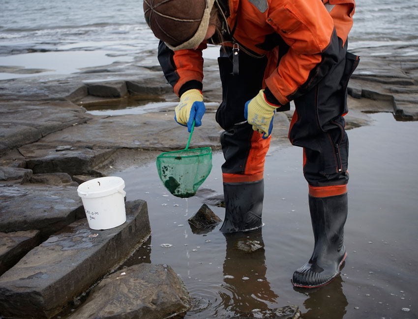 UNIS associate professor Janne Søreide sampling intertidal life with a small hand-held net.