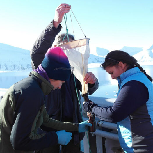 Featured image for: Understanding the roles of microbial eukaryotes in the High Arctic ecosystems