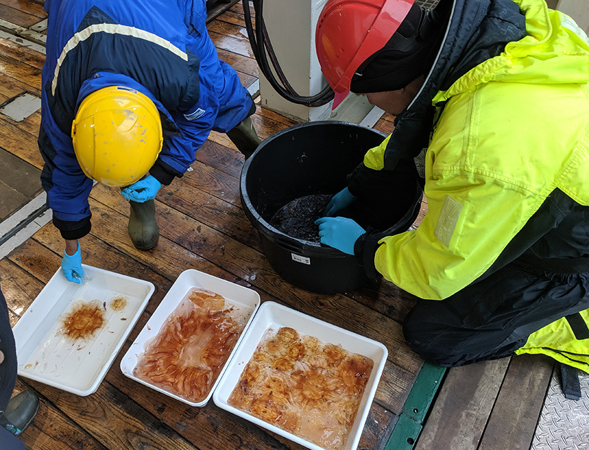 Sorting out a zooplankton catch on a boat deck