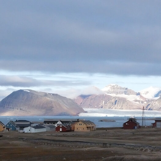 Featured image for: Found traces of antidepressants and painkillers in crustaceans on Svalbard