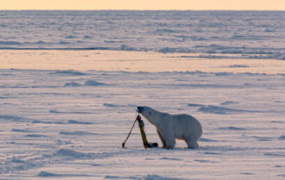 Featured image for 'Nansen Legacy project blog: Tiny Arctic wildlife matters'
