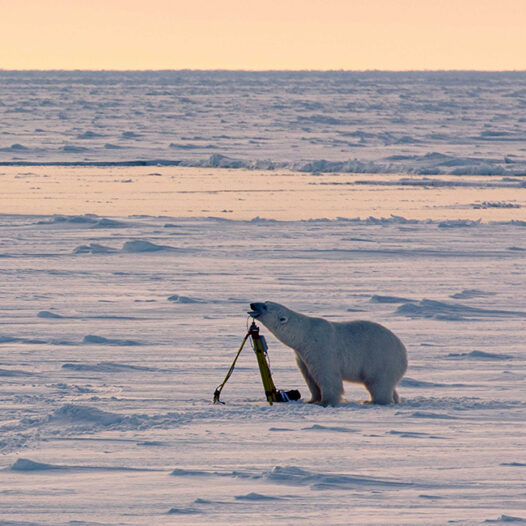 Featured image for: Nansen Legacy project blog: Tiny Arctic wildlife matters