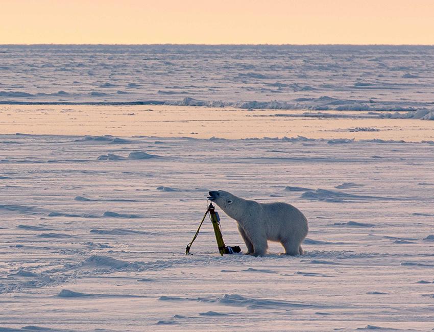 Nansen Legacy project blog: Tiny Arctic wildlife matters