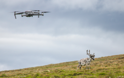Featured image for 'Drone-based reindeer counting in Svalbard'