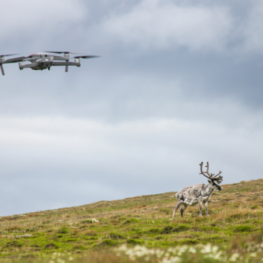 Featured image for: Drone-based reindeer counting in Svalbard