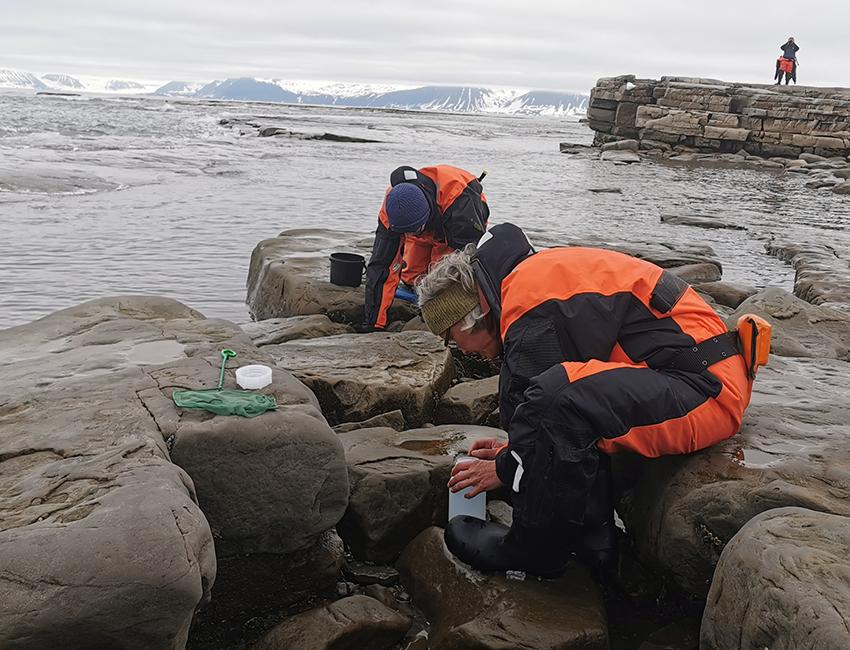 Major biological changes on the shoreline of Svalbard