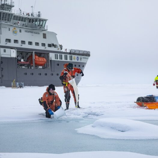 Featured image for: Aliens in the Arctic? The outer-worldly life that resides within sea ice