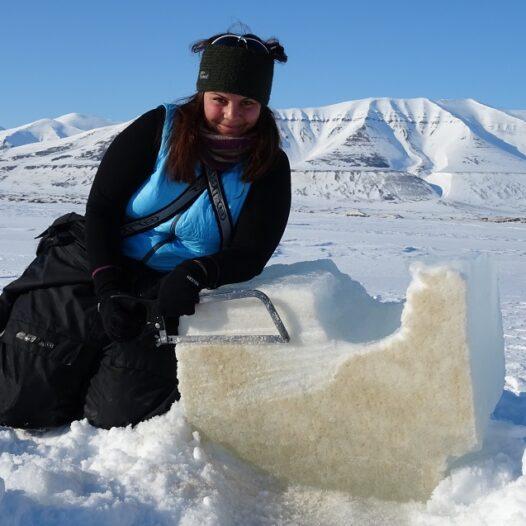 Featured image for: Dramatic temperature rises in the Arctic hits vital sea ice algae